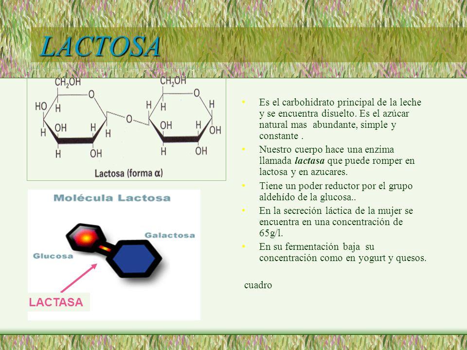 LACTOSA Es el carbohidrato principal de la leche y se encuentra disuelto. Es el azúcar natural mas abundante, simple y constante. Nuestro cuerpo hace