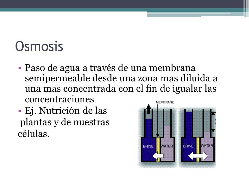 Osmosis Paso de agua a través de una membrana semipermeable desde una zona mas diluida a una mas concentrada con el fin de igualar las concentraciones