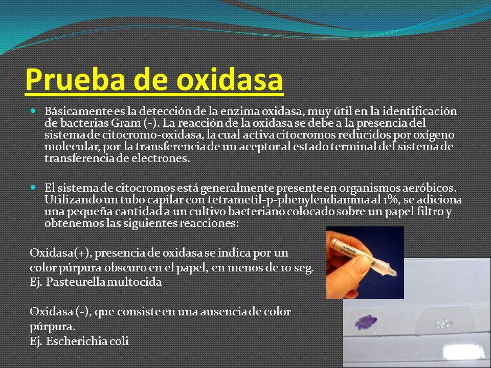 Ácido de la Glucosa muchas de las bacterias de interés médico usan la glucosa como fuente de carbono, como parte importante de su metabolismo.