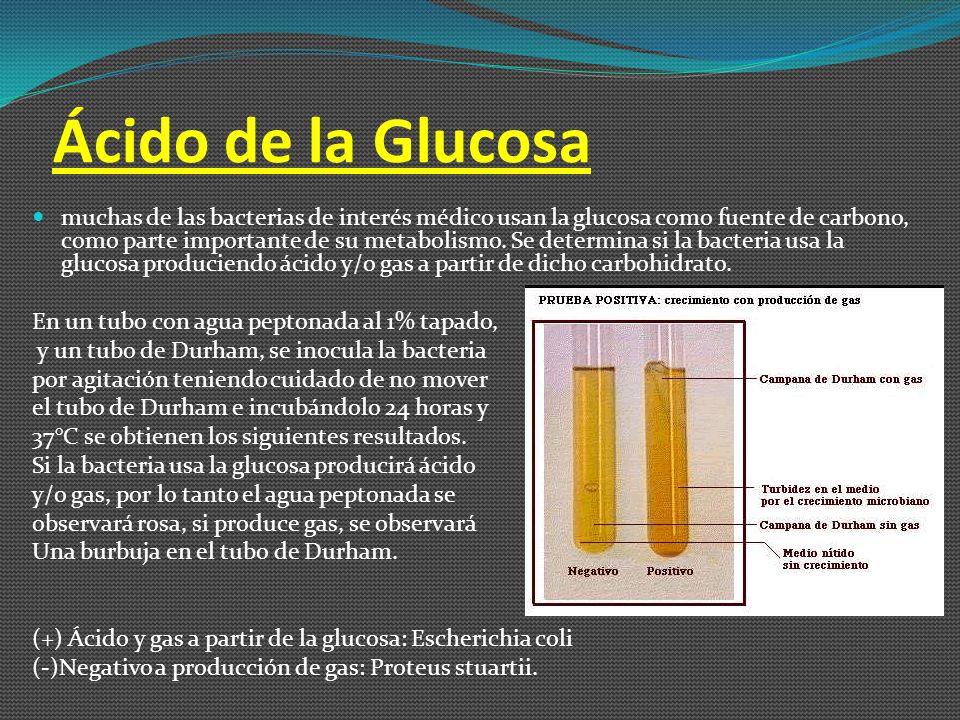 Contaje de Placa Consiste en el plaqueo de una muestra de volumen conocido del alimento que se analiza.