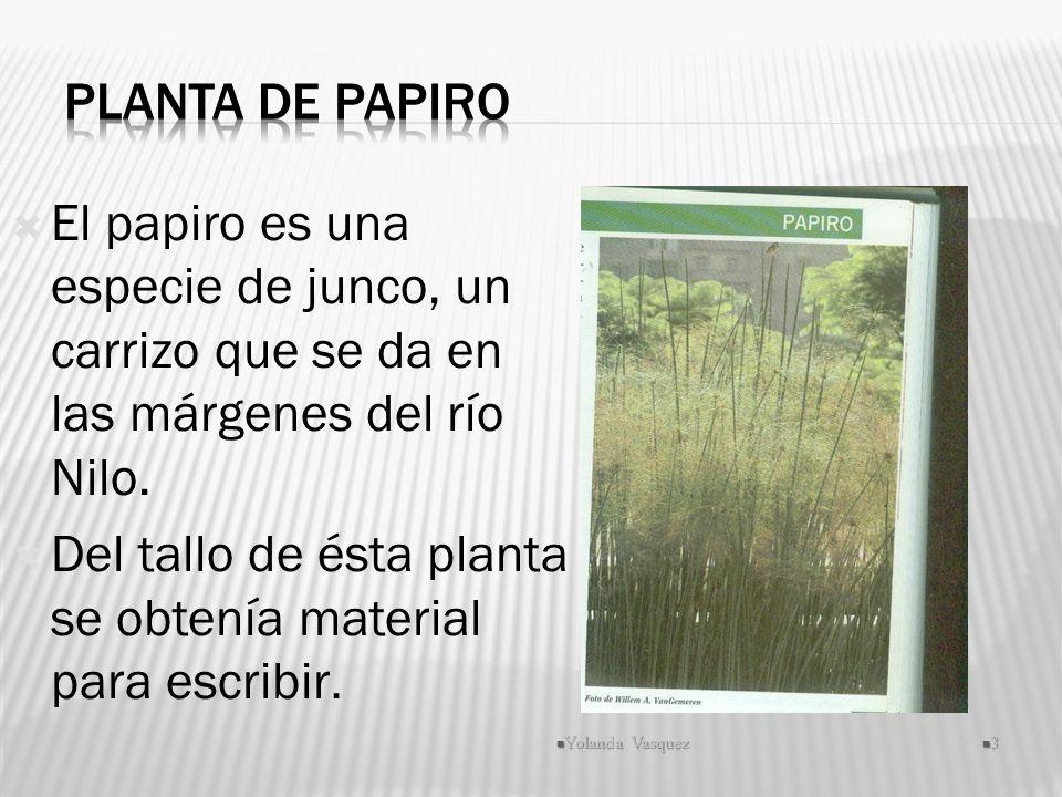El papiro es una especie de junco, un carrizo que se da en las márgenes del río Nilo. Del tallo de ésta planta se obtenía material para escribir. Yola