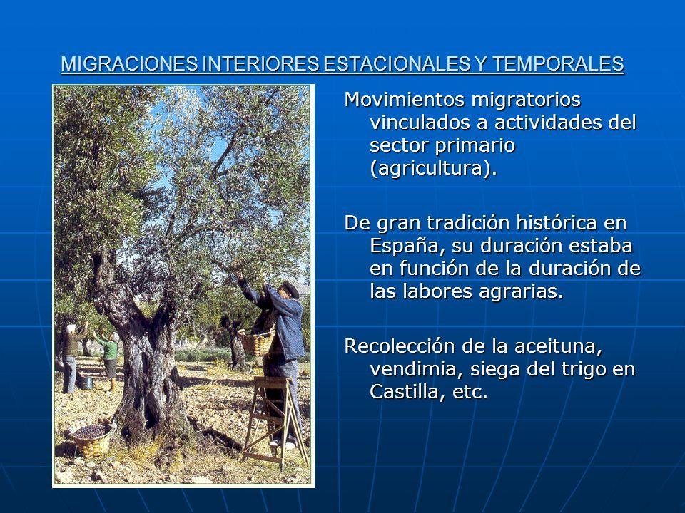 MIGRACIONES INTERIORES ESTACIONALES Y TEMPORALES Movimientos migratorios vinculados a actividades del sector primario (agricultura). De gran tradición