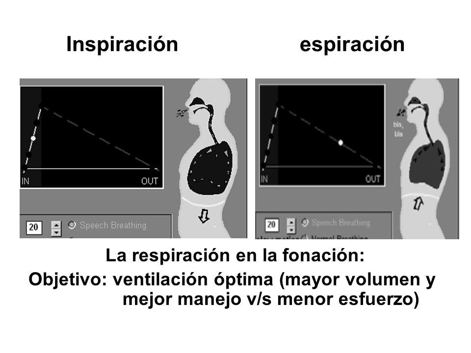 Inspiración espiración La respiración en la fonación: Objetivo: ventilación óptima (mayor volumen y mejor manejo v/s menor esfuerzo)