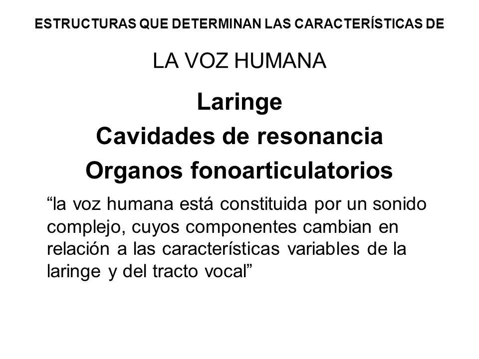 ESTRUCTURAS QUE DETERMINAN LAS CARACTERÍSTICAS DE LA VOZ HUMANA Laringe Cavidades de resonancia Organos fonoarticulatorios la voz humana está constitu