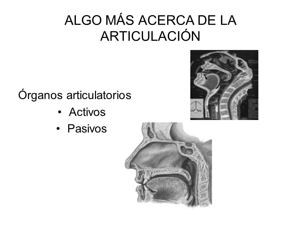 ALGO MÁS ACERCA DE LA ARTICULACIÓN Órganos articulatorios Activos Pasivos