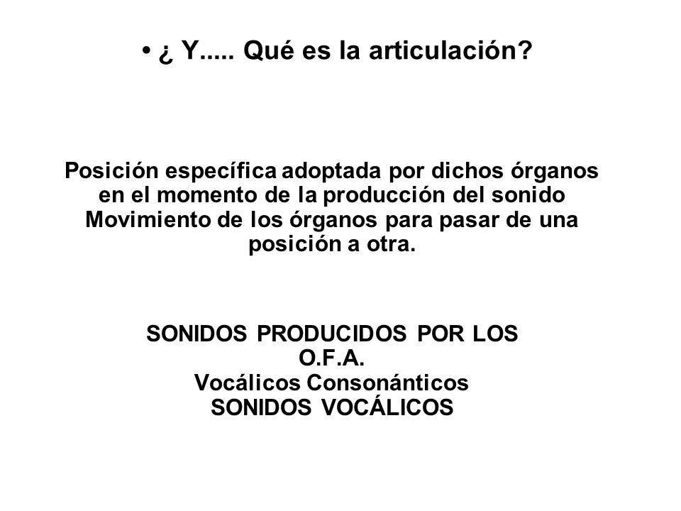 ¿ Y..... Qué es la articulación? Posición específica adoptada por dichos órganos en el momento de la producción del sonido Movimiento de los órganos p