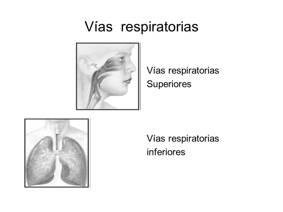 ¿Cuáles son las estructuras responsables de la resonancia en la voz humana?