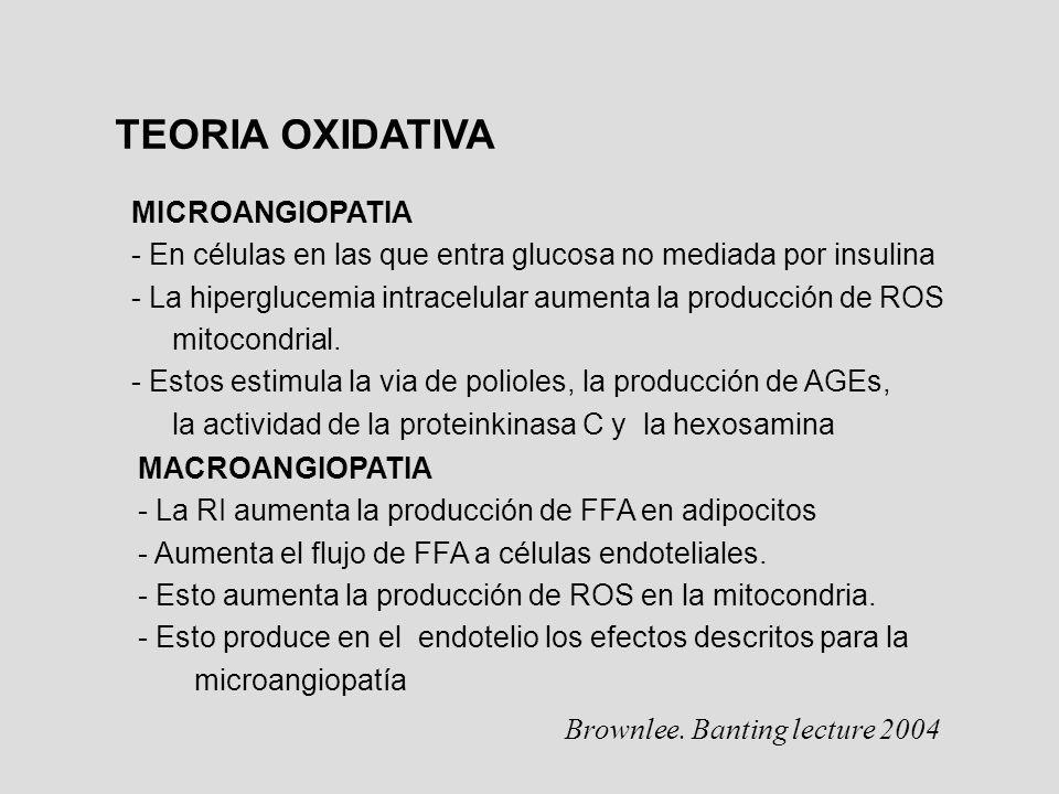 TEORIA OXIDATIVA MICROANGIOPATIA - En células en las que entra glucosa no mediada por insulina - La hiperglucemia intracelular aumenta la producción d