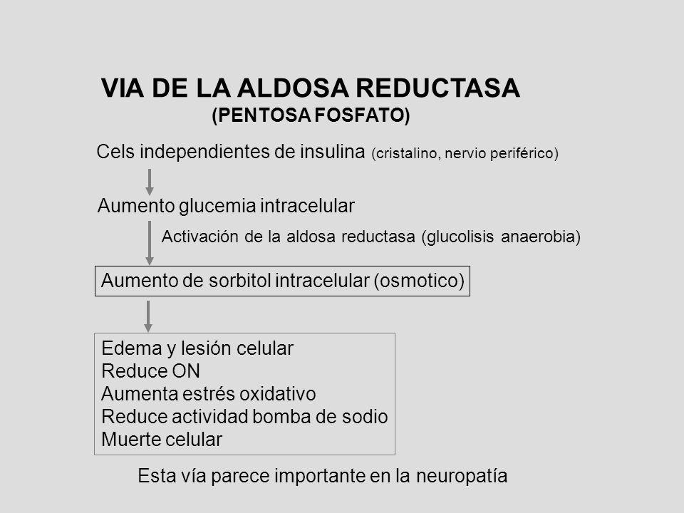 Aumento glucemia intracelular VIA DE LA ALDOSA REDUCTASA (PENTOSA FOSFATO) Cels independientes de insulina (cristalino, nervio periférico) Activación