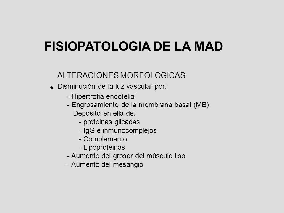 ALTERACIONES MORFOLOGICAS Disminución de la luz vascular por: - Hipertrofia endotelial - Engrosamiento de la membrana basal (MB) Deposito en ella de: