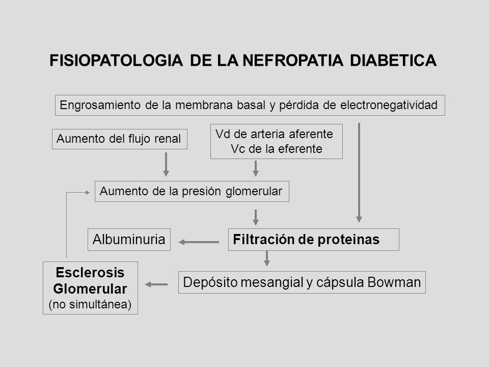 Engrosamiento de la membrana basal y pérdida de electronegatividad Aumento del flujo renal Aumento de la presión glomerular Vd de arteria aferente Vc