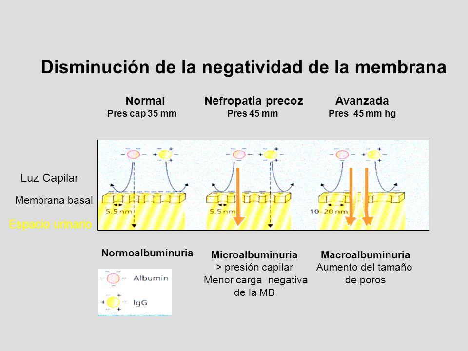 Disminución de la negatividad de la membrana Normal Nefropatía precoz Avanzada Pres cap 35 mm Pres 45 mm Pres 45 mm hg Normoalbuminuria Microalbuminur