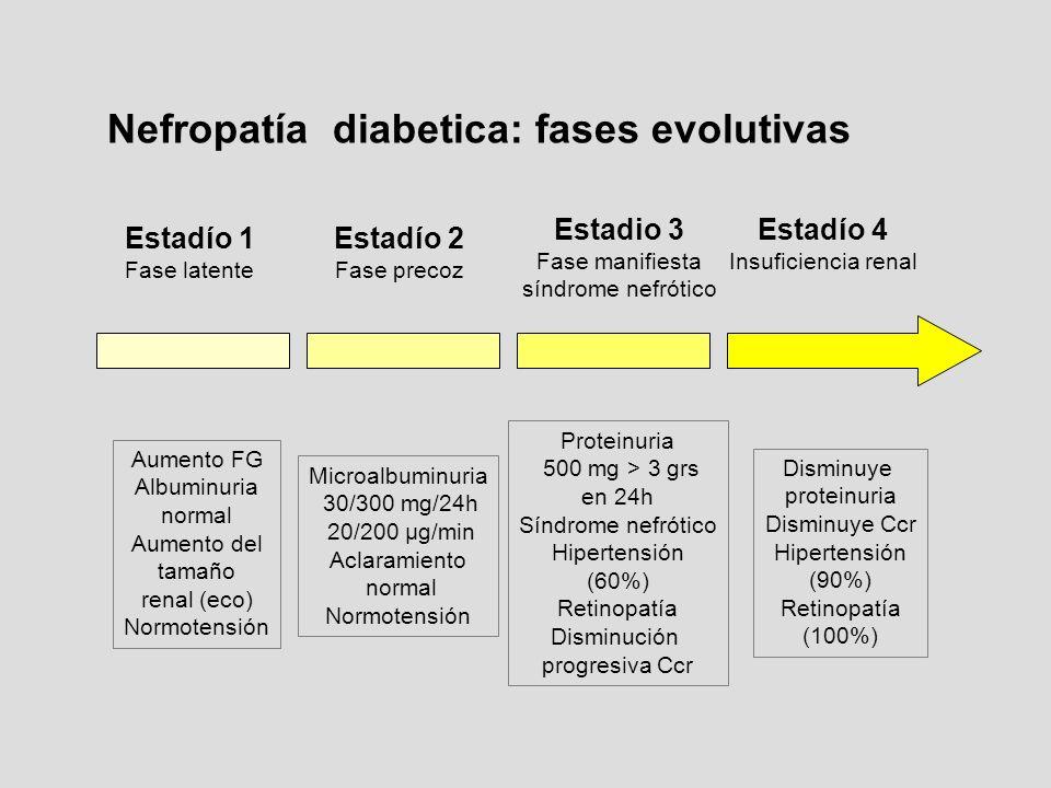 Estadío 1 Fase latente Estadío 2 Fase precoz Estadio 3 Fase manifiesta síndrome nefrótico Estadío 4 Insuficiencia renal Aumento FG Albuminuria normal
