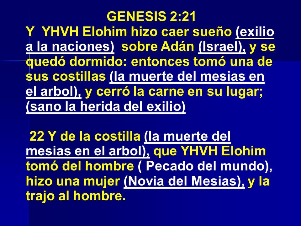 GENESIS 2:21 Y YHVH Elohim hizo caer sueño (exilio a la naciones) sobre Adán (Israel), y se quedó dormido: entonces tomó una de sus costillas (la muer