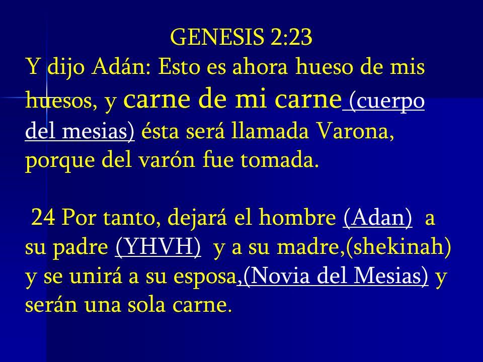 GENESIS 2:23 Y dijo Adán: Esto es ahora hueso de mis huesos, y carne de mi carne (cuerpo del mesias) ésta será llamada Varona, porque del varón fue to