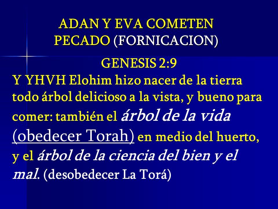 ADAN Y EVA COMETEN PECADO (FORNICACION) GENESIS 2:9 Y YHVH Elohim hizo nacer de la tierra todo árbol delicioso a la vista, y bueno para comer: también