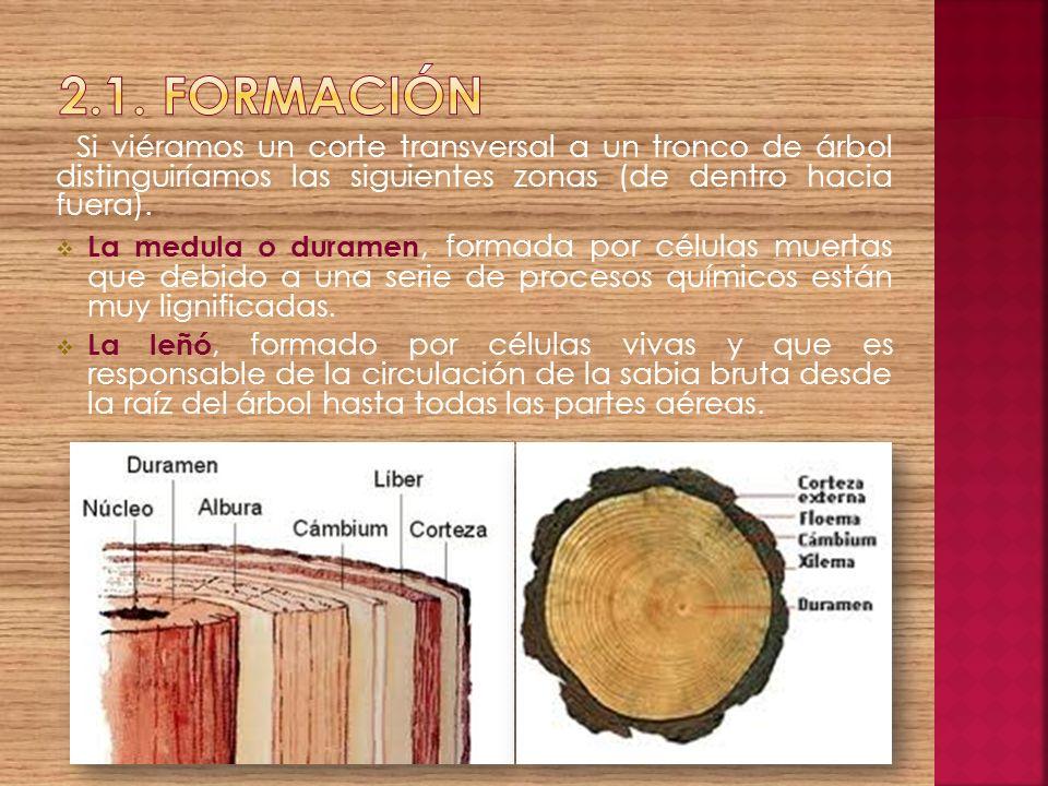 Si viéramos un corte transversal a un tronco de árbol distinguiríamos las siguientes zonas (de dentro hacia fuera). La medula o duramen, formada por c
