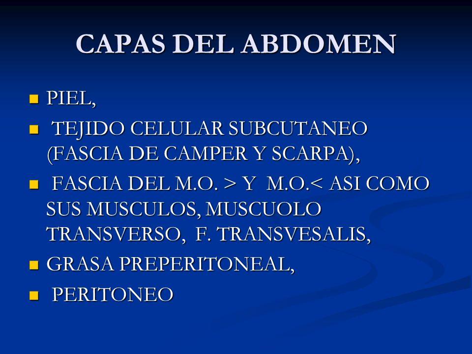CAPAS DEL ABDOMEN PIEL, PIEL, TEJIDO CELULAR SUBCUTANEO (FASCIA DE CAMPER Y SCARPA), TEJIDO CELULAR SUBCUTANEO (FASCIA DE CAMPER Y SCARPA), FASCIA DEL M.O.