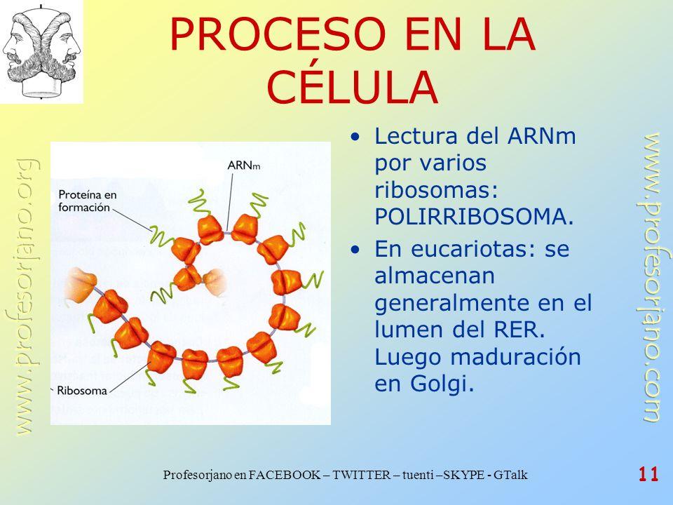 Profesorjano en FACEBOOK – TWITTER – tuenti –SKYPE - GTalk 11 PROCESO EN LA CÉLULA Lectura del ARNm por varios ribosomas: POLIRRIBOSOMA. En eucariotas