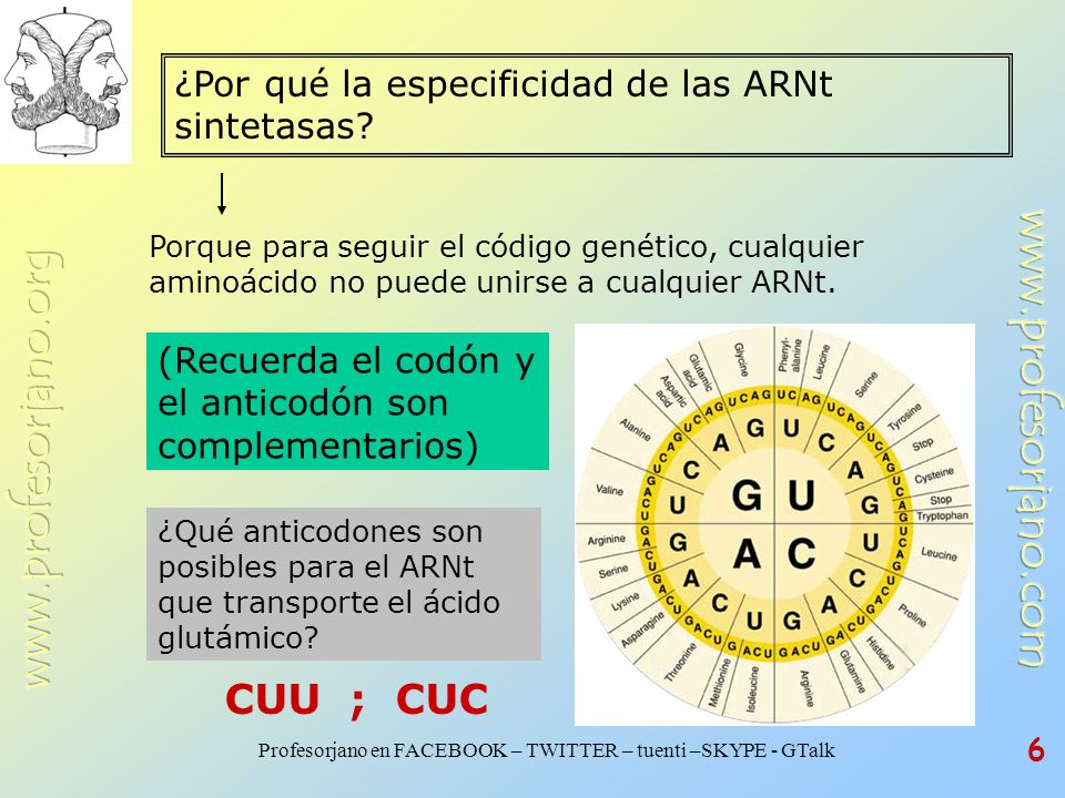 Profesorjano en FACEBOOK – TWITTER – tuenti –SKYPE - GTalk 6 ¿Por qué la especificidad de las ARNt sintetasas? Porque para seguir el código genético,