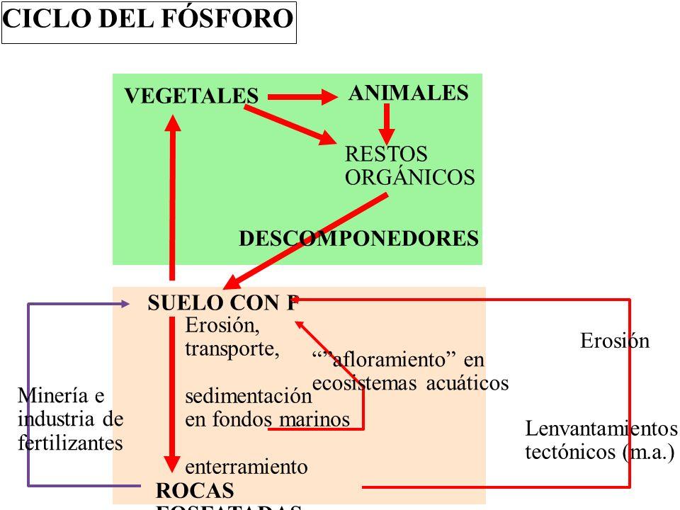 CICLOS BIOGEQUÍMICOS ATMÓSFERA BIOSFERA GEOSFERA