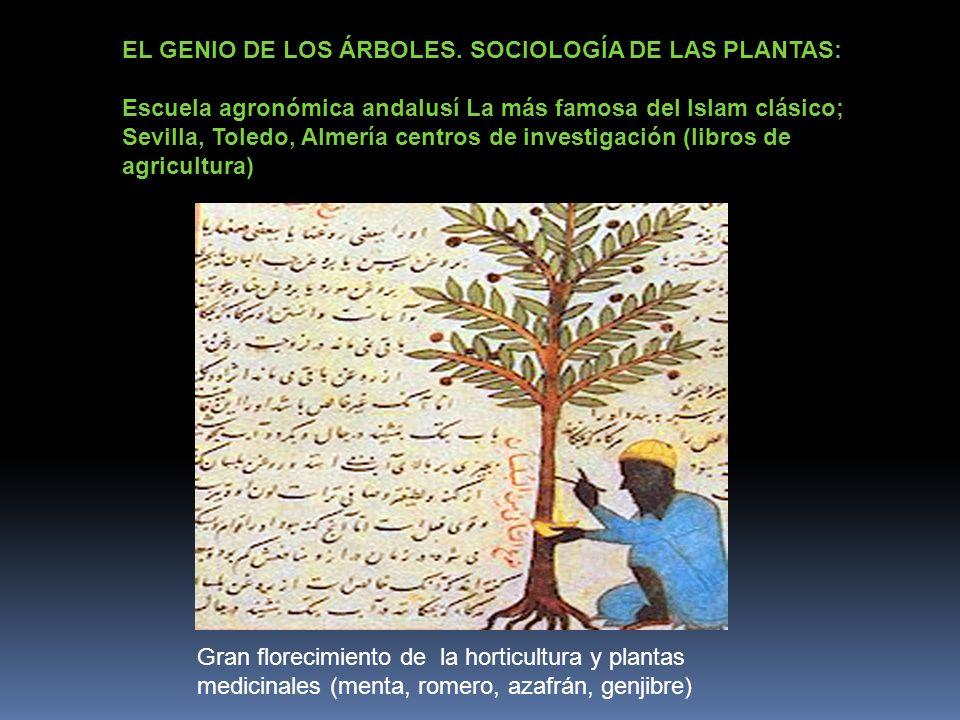 EL GENIO DE LOS ÁRBOLES. SOCIOLOGÍA DE LAS PLANTAS: Escuela agronómica andalusí La más famosa del Islam clásico; Sevilla, Toledo, Almería centros de i