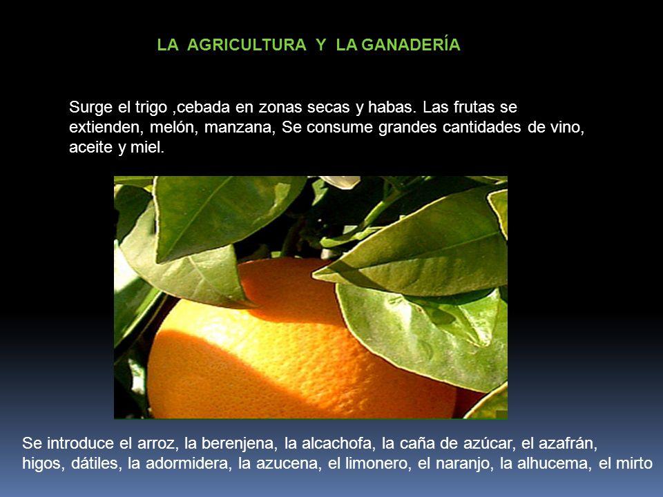 LA AGRICULTURA Y LA GANADERÍA Se introduce el arroz, la berenjena, la alcachofa, la caña de azúcar, el azafrán, higos, dátiles, la adormidera, la azuc