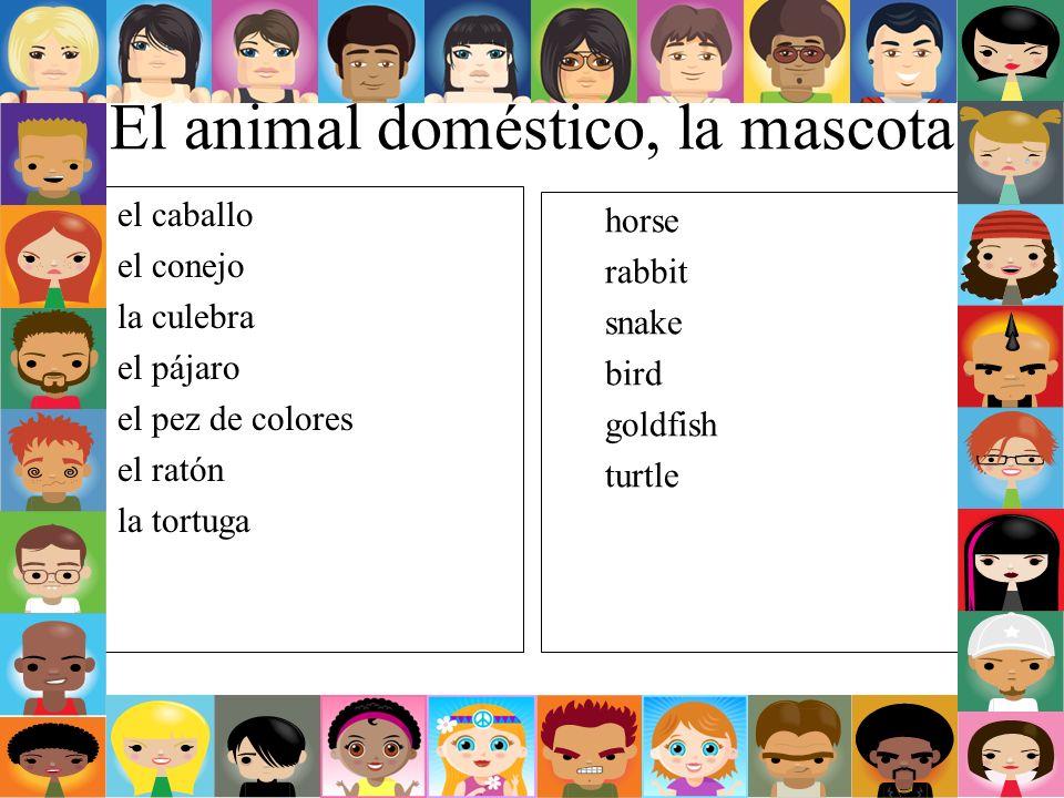 El animal doméstico, la mascota el caballo el conejo la culebra el pájaro el pez de colores el ratón la tortuga horse rabbit snake bird goldfish turtl