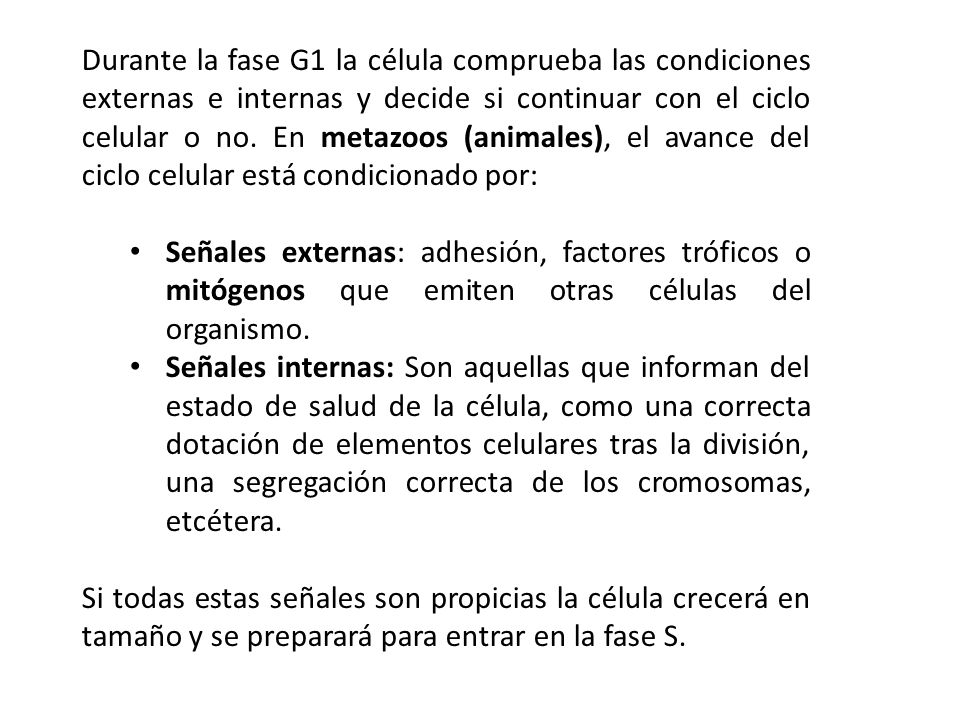 Durante la fase G1 la célula comprueba las condiciones externas e internas y decide si continuar con el ciclo celular o no. En metazoos (animales), el