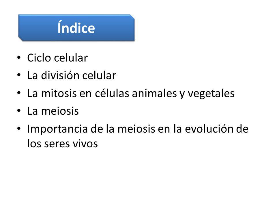 Ciclo celular La división celular La mitosis en células animales y vegetales La meiosis Importancia de la meiosis en la evolución de los seres vivos Í