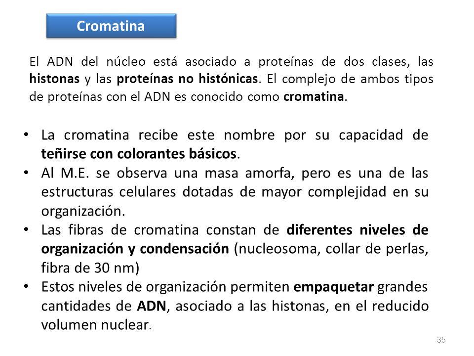 El ADN del núcleo está asociado a proteínas de dos clases, las histonas y las proteínas no histónicas. El complejo de ambos tipos de proteínas con el