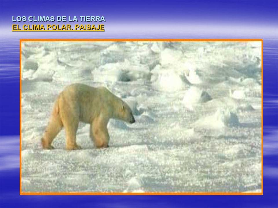 LOS CLIMAS DE LA TIERRA EL CLIMA POLAR. PAISAJE EL CLIMA POLAR. PAISAJE EL CLIMA POLAR. PAISAJE