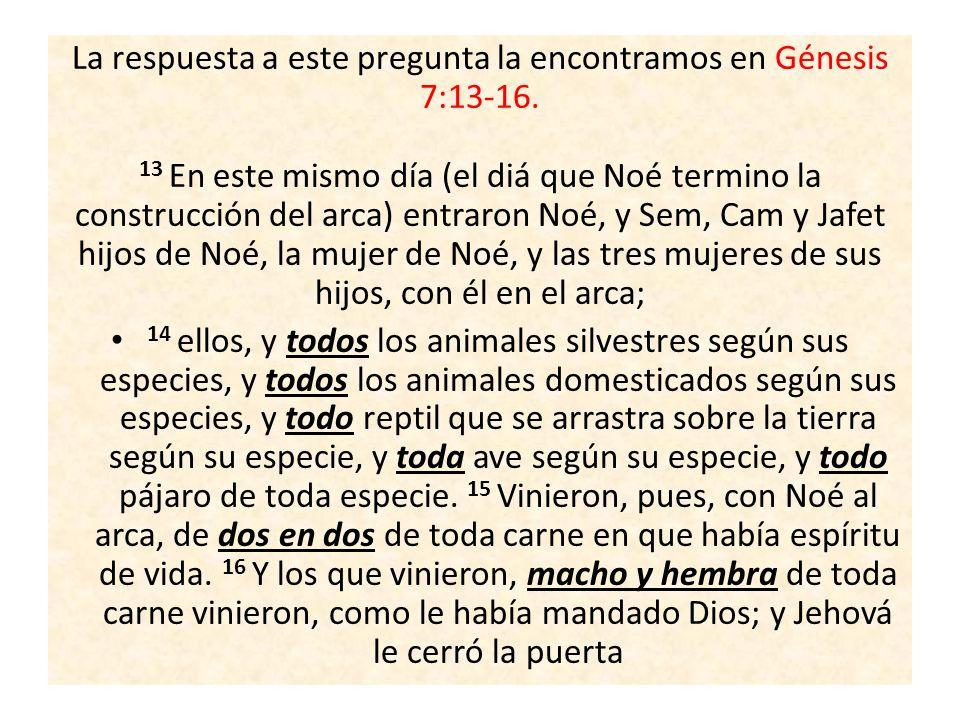 La respuesta a este pregunta la encontramos en Génesis 7:13-16. 13 En este mismo día (el diá que Noé termino la construcción del arca) entraron Noé, y