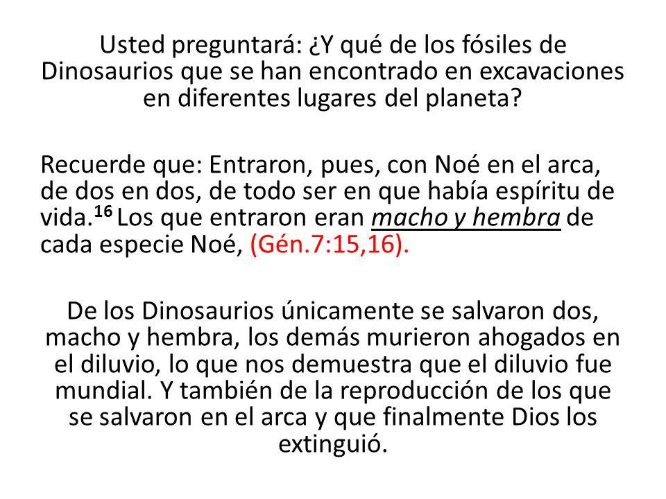 Usted preguntará: ¿Y qué de los fósiles de Dinosaurios que se han encontrado en excavaciones en diferentes lugares del planeta? Recuerde que: Entraron