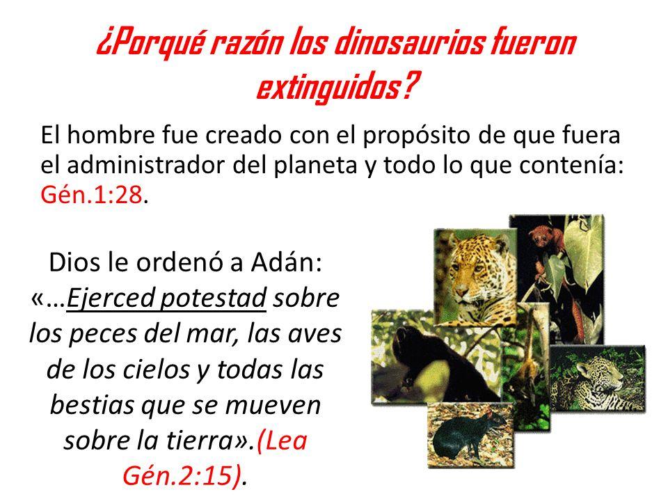 ¿Porqué razón los dinosaurios fueron extinguidos? El hombre fue creado con el propósito de que fuera el administrador del planeta y todo lo que conten