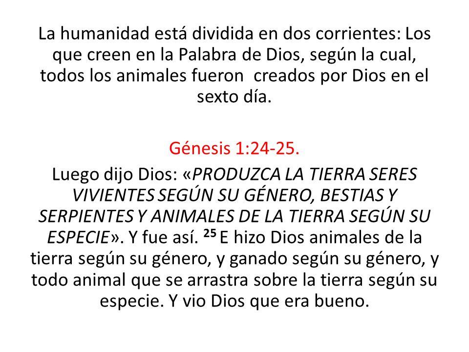 La humanidad está dividida en dos corrientes: Los que creen en la Palabra de Dios, según la cual, todos los animales fueron creados por Dios en el sex