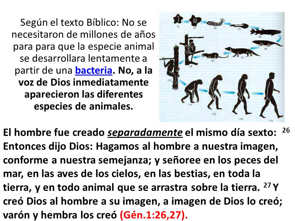 Según el texto Bíblico: No se necesitaron de millones de años para para que la especie animal se desarrollara lentamente a partir de una bacteria. No,