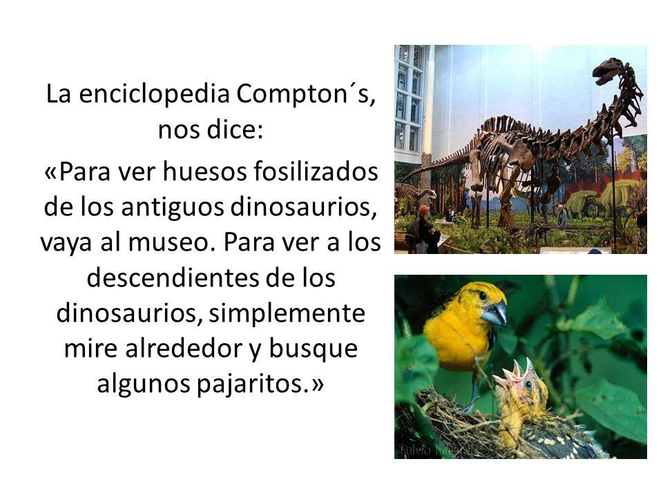 La enciclopedia Compton´s, nos dice: «Para ver huesos fosilizados de los antiguos dinosaurios, vaya al museo. Para ver a los descendientes de los dino