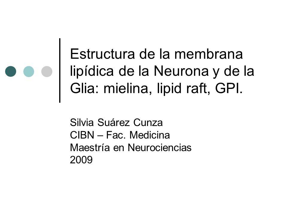 Estructura de la membrana lipídica de la Neurona y de la Glia: mielina, lipid raft, GPI. Silvia Suárez Cunza CIBN – Fac. Medicina Maestría en Neurocie