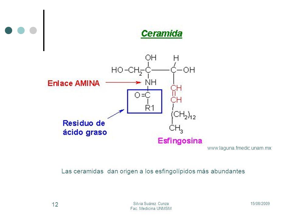 15/08/2009Silvia Suárez Cunza Fac. Medicina UNMSM 12 Las ceramidas dan origen a los esfingolípidos más abundantes www.laguna.fmedic.unam.mx