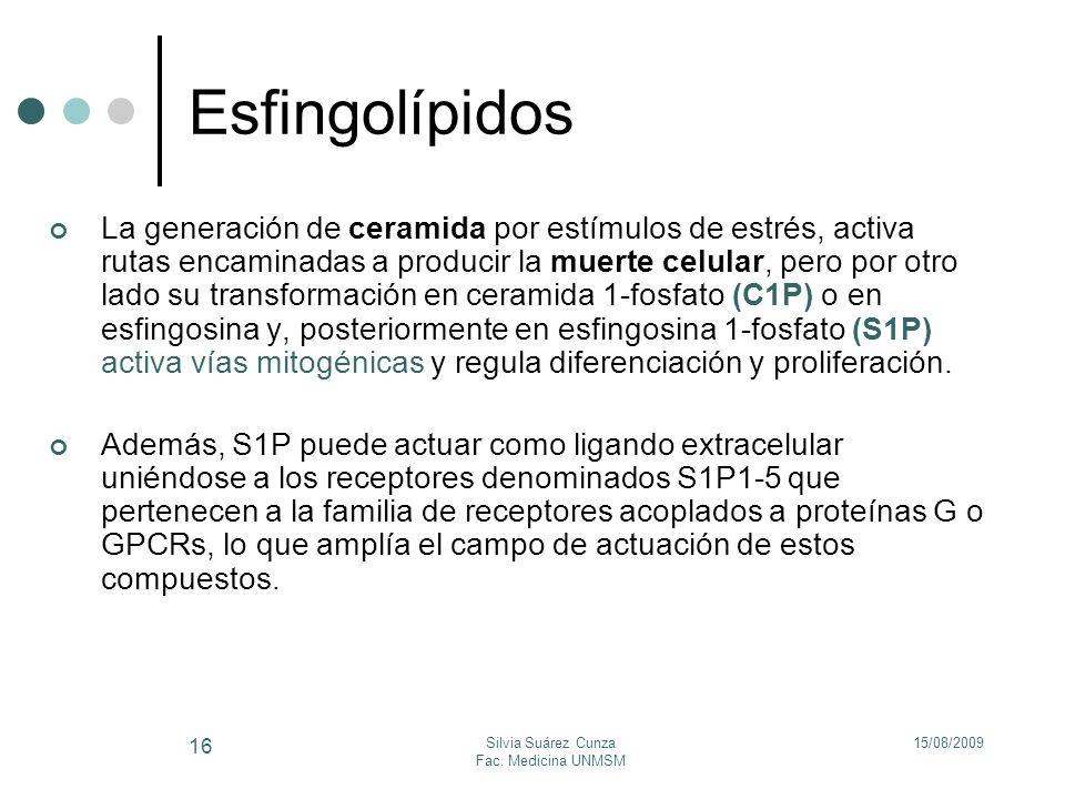 15/08/2009Silvia Suárez Cunza Fac. Medicina UNMSM 16 Esfingolípidos La generación de ceramida por estímulos de estrés, activa rutas encaminadas a prod