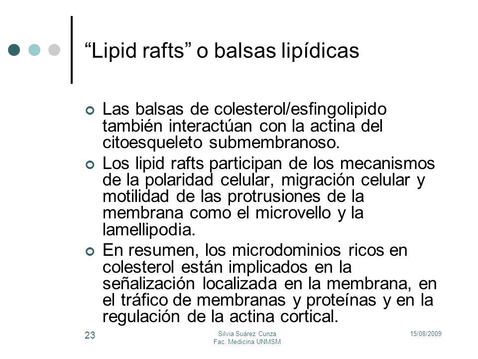 15/08/2009Silvia Suárez Cunza Fac. Medicina UNMSM 23 Las balsas de colesterol/esfingolipido también interactúan con la actina del citoesqueleto submem