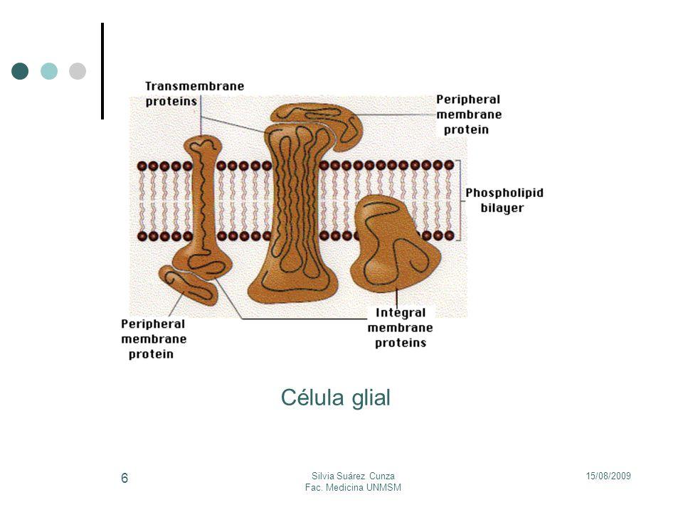 15/08/2009Silvia Suárez Cunza Fac. Medicina UNMSM 6 Célula glial