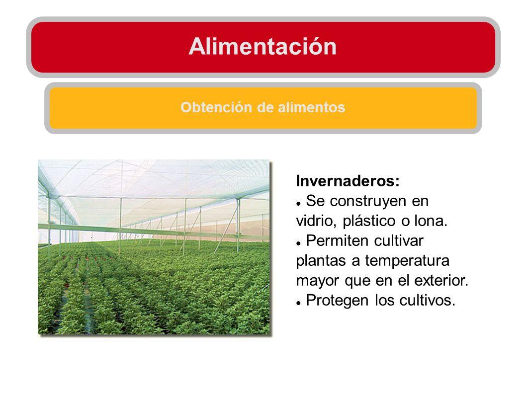 Obtención de alimentos Invernaderos: Se construyen en vidrio, plástico o lona. Permiten cultivar plantas a temperatura mayor que en el exterior. Prote