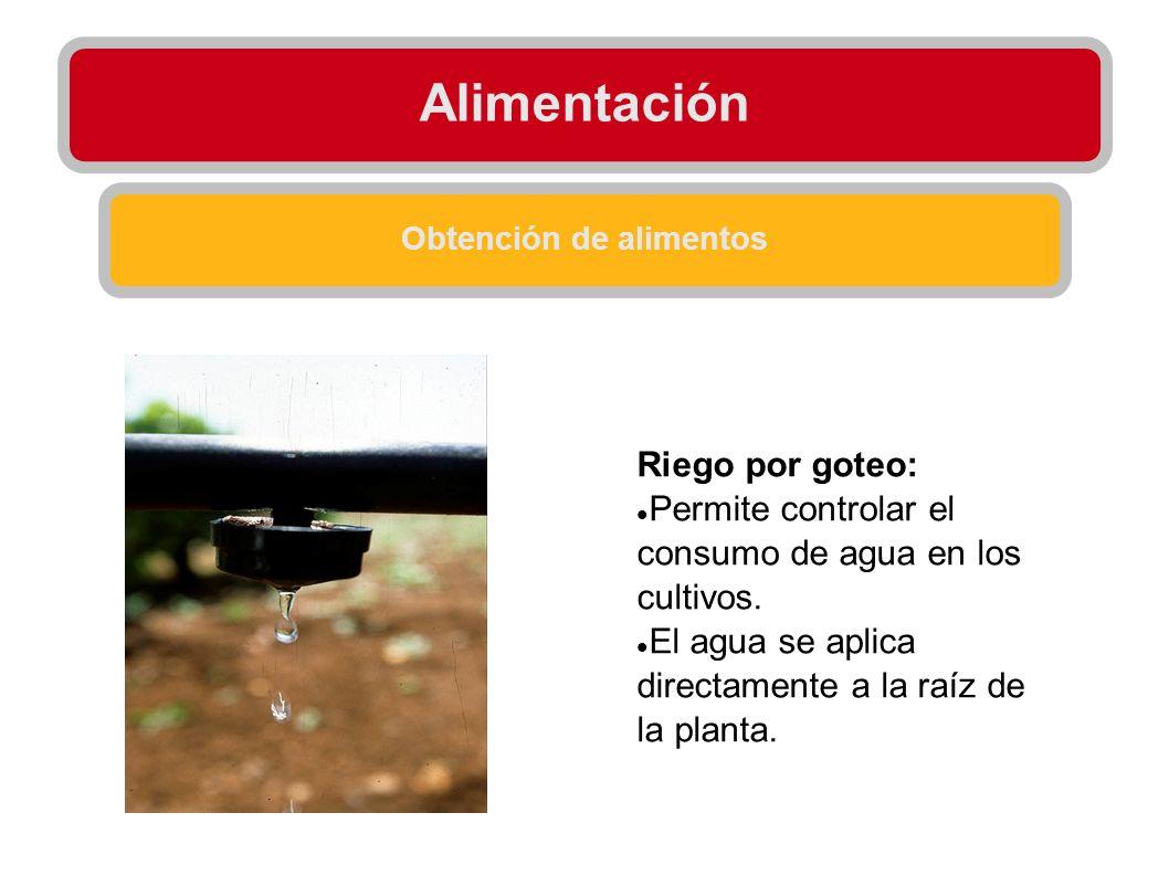 Alimentación Obtención de alimentos Riego por goteo: Permite controlar el consumo de agua en los cultivos. El agua se aplica directamente a la raíz de