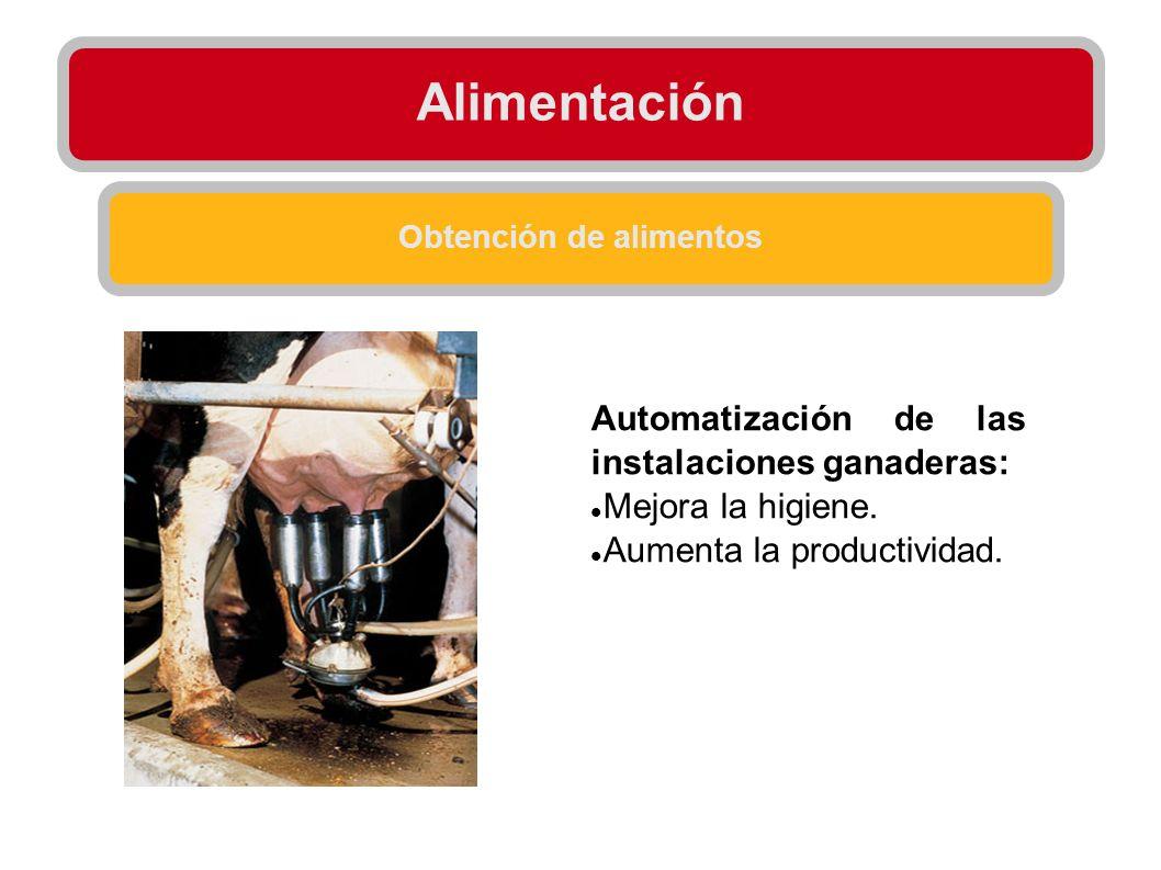 Alimentación Obtención de alimentos Automatización de las instalaciones ganaderas: Mejora la higiene. Aumenta la productividad.