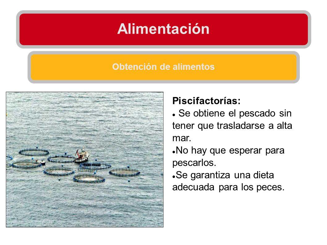 Alimentación Obtención de alimentos Piscifactorías: Se obtiene el pescado sin tener que trasladarse a alta mar. No hay que esperar para pescarlos. Se