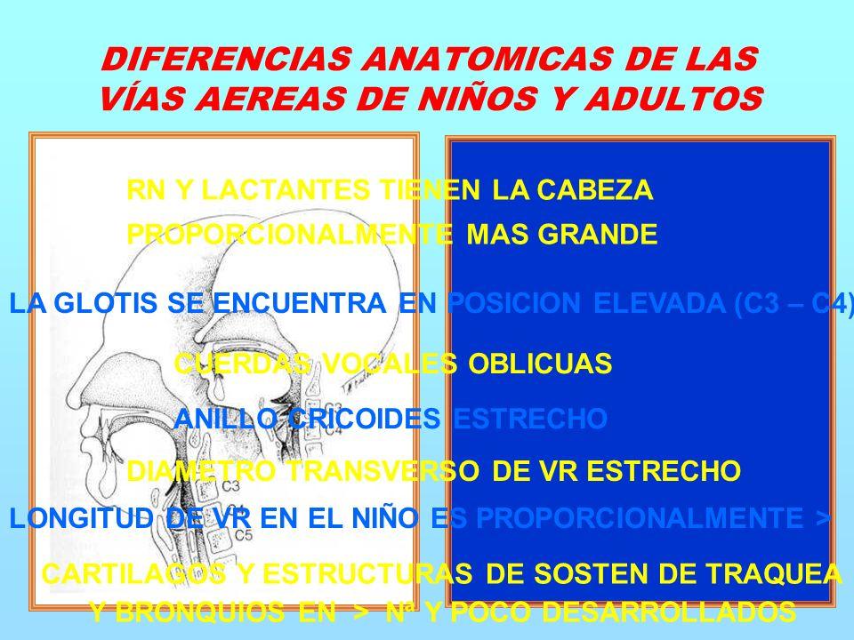 DIFERENCIAS ANATOMICAS DE LAS VÍAS AEREAS DE NIÑOS Y ADULTOS RN Y LACTANTES TIENEN LA CABEZA PROPORCIONALMENTE MAS GRANDE LA GLOTIS SE ENCUENTRA EN POSICION ELEVADA (C3 – C4) CUERDAS VOCALES OBLICUAS ANILLO CRICOIDES ESTRECHO DIAMETRO TRANSVERSO DE VR ESTRECHO LONGITUD DE VR EN EL NIÑO ES PROPORCIONALMENTE > CARTILAGOS Y ESTRUCTURAS DE SOSTEN DE TRAQUEA Y BRONQUIOS EN > Nª Y POCO DESARROLLADOS