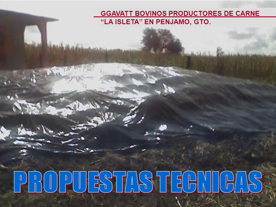 GGAVATT BOVINOS PRODUCTORES DE CARNE LA ISLETA EN PENJAMO, GTO.