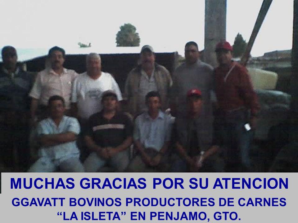 GGAVATT BOVINOS PRODUCTORES DE CARNES LA ISLETA EN PENJAMO, GTO. MUCHAS GRACIAS POR SU ATENCION